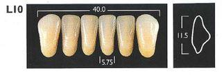 L10-B3 LOWER ANTERIOR MONARCH TEETH