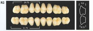 R2-C1 LOWER POSTERIOR MONARCH TEETH