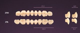 29-A2 MONDIAL TEETH LOWER POSTERIOR