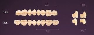 29-C4 MONDIAL TEETH LOWER POSTERIOR