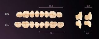 31-A4 MONDIAL TEETH UPPER POSTERIOR