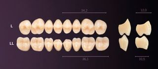 L-B4U PREMIUM TEETH UPPER POSTERIOR