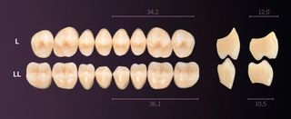LL-B1L PREMIUM TEETH LOWER POSTERIOR