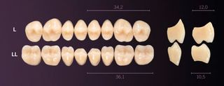 LL-C2L PREMIUM TEETH LOWER POSTERIOR