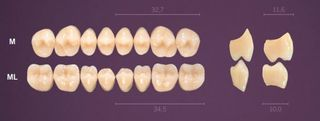 M-B1U PREMIUM TEETH UPPER POSTERIOR