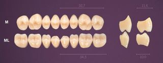 ML-B2L PREMIUM TEETH LOWER POSTERIOR