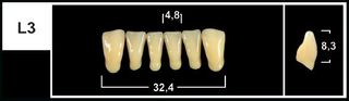 L3 C3 LOWER ANTERIOR TRIBOS TEETH