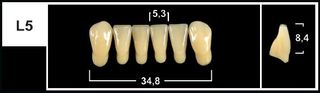 L5 A3.5 LOWER ANTERIOR TRIBOS TEETH