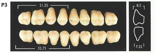 P3-A3 LOWER POSTERIOR MONARCH TEETH