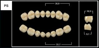 PS A3.5 UPPER POSTERIOR TRIBOS TEETH