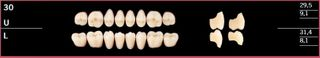 30U-D4 DELARA TEETH UPPER POSTERIOR