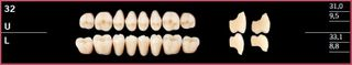 32U-A3.5 DELARA TEETH UPPER POSTERIOR