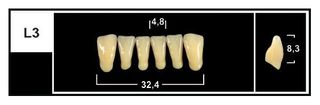 L3 BL3 LOWER ANTERIOR TRIBOS TEETH