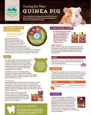Caring for your Guinea Pig A4