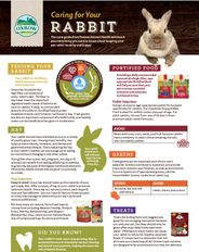 Caring for your Rabbit A4