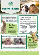All about Dental Health