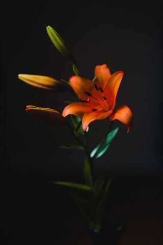 Orange Unscented