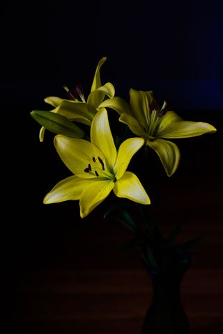 Yellow Scented