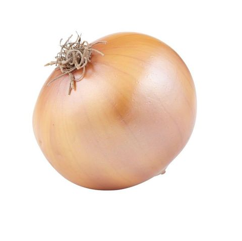 Artificial Onion 20cm