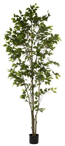 Ficus Tree Green 100x100x213cm