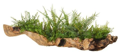 Fern Mix-Aged Hollow Trunk 40x80x29cm