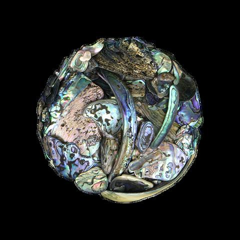NZ Abalone Paua Shell - Satin - Unsorted