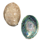 NZ Abalone Paua - Natural Cleaned with Smooth Edge