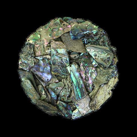 NZ Abalone Paua - Gloss drilled - Small 15-25mm