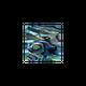 NZ Abalone Paua Shell