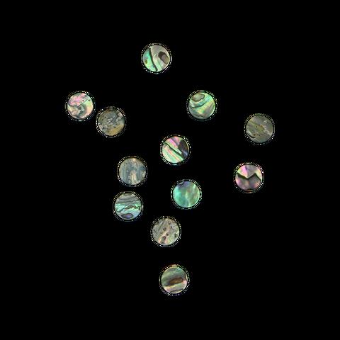 NZ Abalone Paua Shell - Circle - Original Back, Polished 1 Side