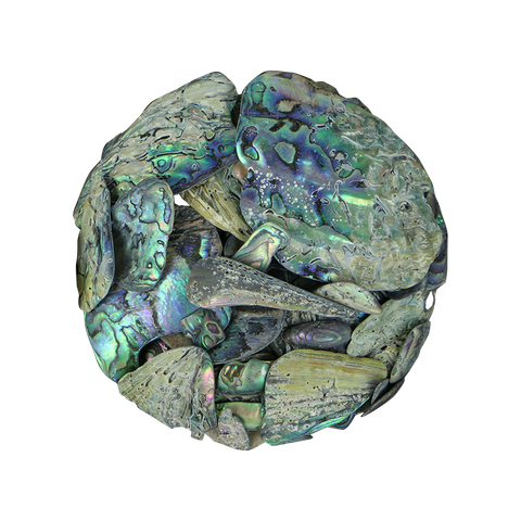 NZ Abalone Paua Shell - Natural - Unsorted