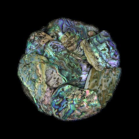 NZ Abalone Paua Shell - Satin - Medium 25-40mm