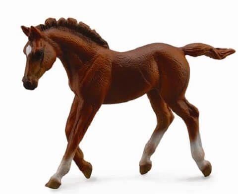 Thoroughbred Foal - CO88670
