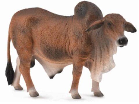 Red Brahman Bull - CO88599