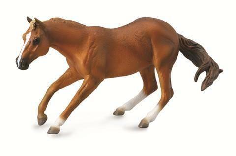 Sorrel Quarter Horse Stallion - CO88585