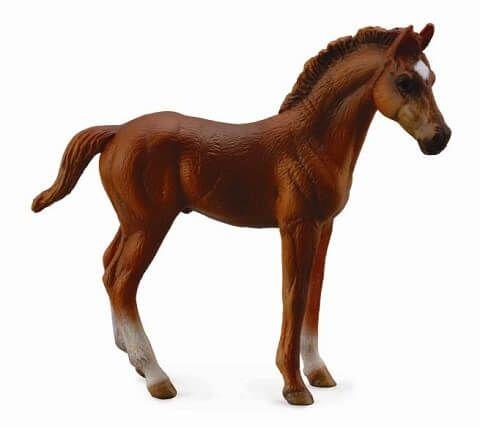 Thoroughbred Foal - CO88671