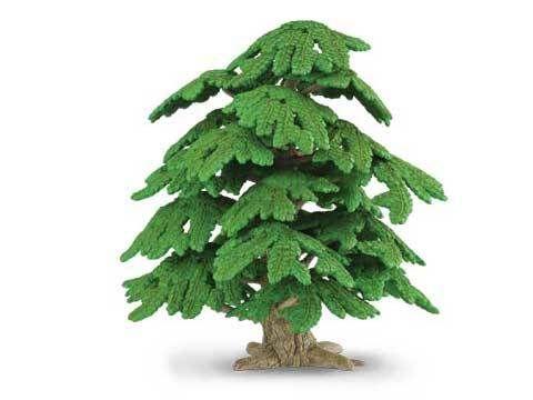 Ginkgo Biloba Tree - CO89329
