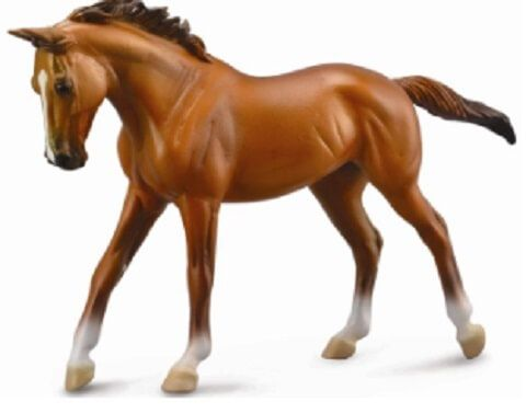 Thoroughbred Mare - CO89579