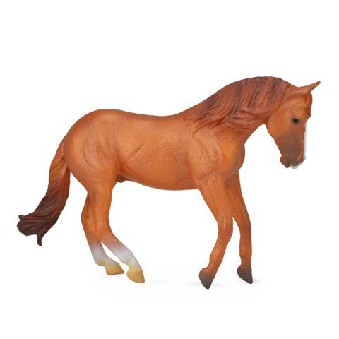 Australian Stock Horse Stallion - CO88712