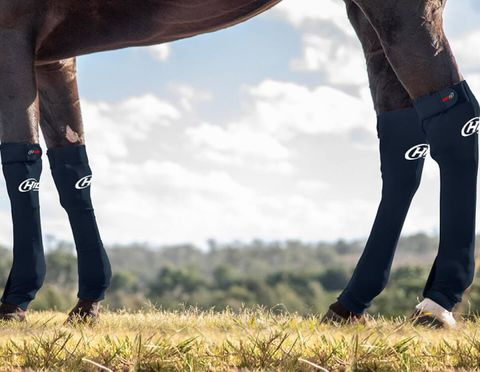 Equine Front Seamless Compression Sock - 1563