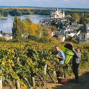 Anjou/Saumur