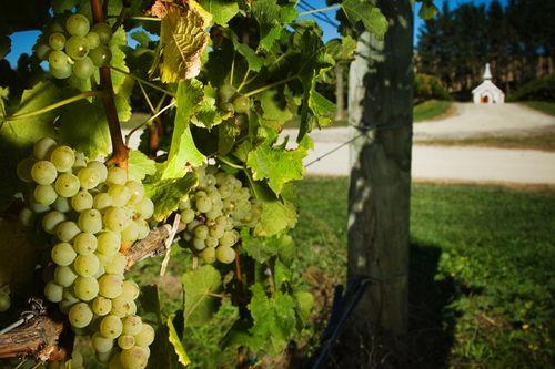 Celebrate Sauvignon Blanc Day with Henri Bourgeois' family!