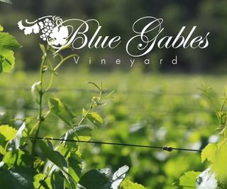 Blue Gables Vineyard
