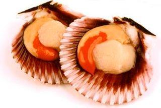 Scallops Half Shell 20/30 1doz