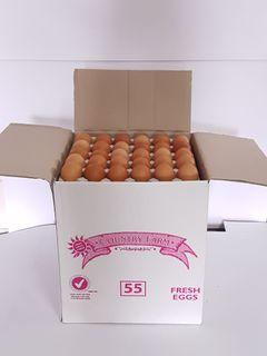 Eggs 55 GRAM Filler Pack