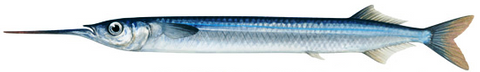 Nz Made Piper Net 40M  Mesh 1 Inch