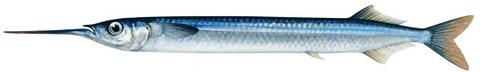 Nz Made Piper Net 15M Mono 1 Inch Mesh