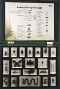 Animal kingdom collection (2) 20 spec.
