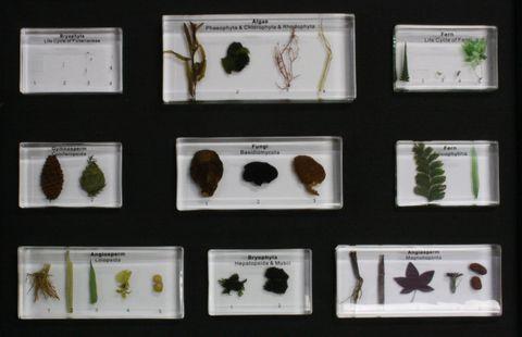 Plant Kingdom collection 25 specimens.