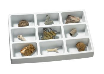 Fossil collection set of 9